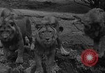 Image of Bronx Zoo New York City USA, 1941, second 14 stock footage video 65675053566