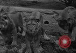 Image of Bronx Zoo New York City USA, 1941, second 15 stock footage video 65675053566