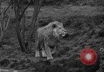 Image of Bronx Zoo New York City USA, 1941, second 16 stock footage video 65675053566
