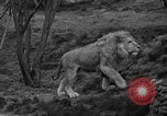 Image of Bronx Zoo New York City USA, 1941, second 17 stock footage video 65675053566