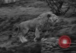 Image of Bronx Zoo New York City USA, 1941, second 18 stock footage video 65675053566