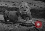 Image of Bronx Zoo New York City USA, 1941, second 19 stock footage video 65675053566