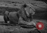 Image of Bronx Zoo New York City USA, 1941, second 20 stock footage video 65675053566