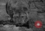 Image of Bronx Zoo New York City USA, 1941, second 21 stock footage video 65675053566