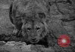 Image of Bronx Zoo New York City USA, 1941, second 22 stock footage video 65675053566