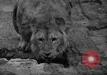 Image of Bronx Zoo New York City USA, 1941, second 23 stock footage video 65675053566