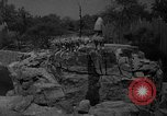 Image of Bronx Zoo New York City USA, 1941, second 24 stock footage video 65675053566