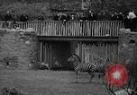 Image of Bronx Zoo New York City USA, 1941, second 28 stock footage video 65675053566