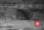 Image of Bronx Zoo New York City USA, 1941, second 29 stock footage video 65675053566
