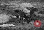 Image of Bronx Zoo New York City USA, 1941, second 30 stock footage video 65675053566