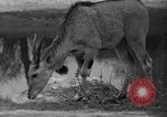 Image of Bronx Zoo New York City USA, 1941, second 31 stock footage video 65675053566