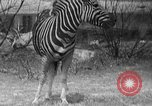 Image of Bronx Zoo New York City USA, 1941, second 34 stock footage video 65675053566