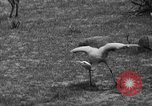 Image of Bronx Zoo New York City USA, 1941, second 36 stock footage video 65675053566