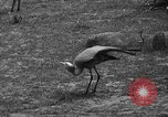 Image of Bronx Zoo New York City USA, 1941, second 37 stock footage video 65675053566
