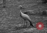 Image of Bronx Zoo New York City USA, 1941, second 38 stock footage video 65675053566