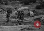 Image of Bronx Zoo New York City USA, 1941, second 39 stock footage video 65675053566