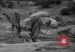 Image of Bronx Zoo New York City USA, 1941, second 40 stock footage video 65675053566