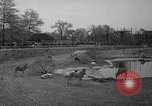 Image of Bronx Zoo New York City USA, 1941, second 41 stock footage video 65675053566
