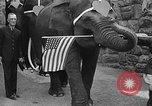 Image of Bronx Zoo New York City USA, 1941, second 48 stock footage video 65675053566