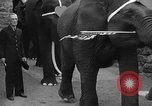 Image of Bronx Zoo New York City USA, 1941, second 49 stock footage video 65675053566