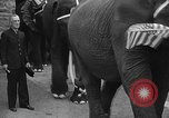 Image of Bronx Zoo New York City USA, 1941, second 50 stock footage video 65675053566
