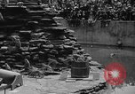 Image of Bronx Zoo New York City USA, 1941, second 52 stock footage video 65675053566