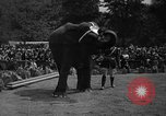 Image of Bronx Zoo New York City USA, 1941, second 59 stock footage video 65675053566