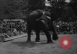 Image of Bronx Zoo New York City USA, 1941, second 60 stock footage video 65675053566