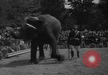 Image of Bronx Zoo New York City USA, 1941, second 61 stock footage video 65675053566