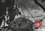 Image of attaching message to carrier pigeon United States USA, 1920, second 14 stock footage video 65675060947