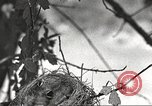 Image of attaching message to carrier pigeon United States USA, 1920, second 33 stock footage video 65675060947
