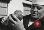Image of carrier pigeons Washington DC USA, 1923, second 49 stock footage video 65675060986