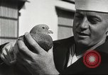 Image of carrier pigeons Washington DC USA, 1923, second 50 stock footage video 65675060986