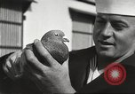 Image of carrier pigeons Washington DC USA, 1923, second 51 stock footage video 65675060986