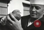 Image of carrier pigeons Washington DC USA, 1923, second 52 stock footage video 65675060986