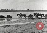 Image of Japanese troops China, 1939, second 53 stock footage video 65675060995