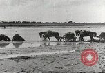 Image of Japanese troops China, 1939, second 54 stock footage video 65675060995