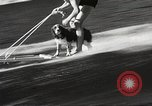 Image of Dog water skiing California United States USA, 1934, second 15 stock footage video 65675061011