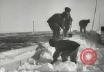 Image of penguins McMurdo Sound Antarctica, 1955, second 46 stock footage video 65675061344