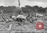 Image of C-47 Skytrain aircraft Burma, 1943, second 4 stock footage video 65675061563