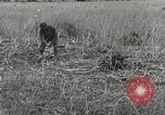 Image of C-47 aircraft Burma, 1944, second 14 stock footage video 65675061654