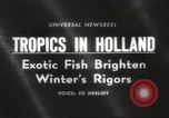 Image of tropical fishes Holland Netherlands, 1965, second 4 stock footage video 65675061772