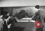 Image of tropical fishes Holland Netherlands, 1965, second 9 stock footage video 65675061772