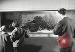 Image of tropical fishes Holland Netherlands, 1965, second 10 stock footage video 65675061772