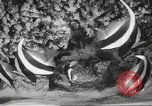 Image of tropical fishes Holland Netherlands, 1965, second 13 stock footage video 65675061772