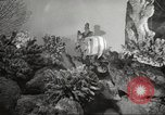 Image of tropical fishes Holland Netherlands, 1965, second 15 stock footage video 65675061772