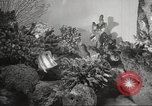 Image of tropical fishes Holland Netherlands, 1965, second 19 stock footage video 65675061772