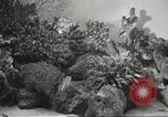 Image of tropical fishes Holland Netherlands, 1965, second 20 stock footage video 65675061772