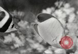 Image of tropical fishes Holland Netherlands, 1965, second 30 stock footage video 65675061772