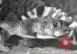 Image of tropical fishes Holland Netherlands, 1965, second 34 stock footage video 65675061772